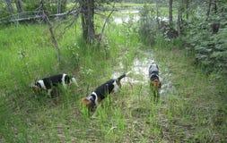 Hunde im Wald Stockfotografie
