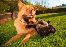 Hunde im Yard Stockfoto