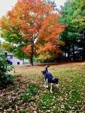 Hunde im Yard Stockfotos