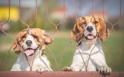 Hunde können nicht warten, um spazierenzugehen stockbilder