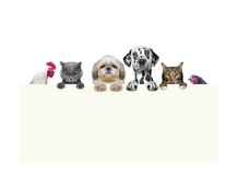 Hunde, Katzen, Huhn und Hahn, die einen Rahmen in ihren Tatzen halten Stockfotos