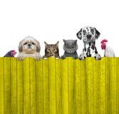 Hunde, Katzen, Huhn und Hahn schauen durch einen Zaun Lizenzfreie Stockfotos