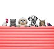 Hunde, Katzen, Huhn und Hahn schauen durch einen Zaun Lizenzfreies Stockbild