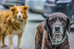 hunde stockfotos