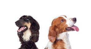 Hunde lokalisiert auf weißem Hintergrund stockbilder