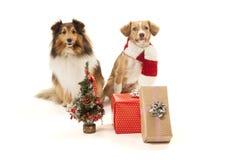 Hunde mit Geschenken Stockbild