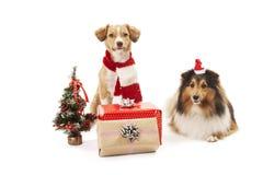 Hunde mit Geschenken Stockbilder