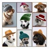 Hunde mit Hüten stockfoto