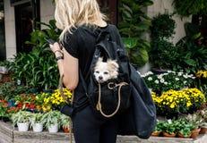 Hunde in New York City lizenzfreie stockbilder