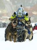 Hunde, Pferdeschlitten und mushers in Pirena 2012 Stockbild