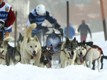 Hunde, Pferdeschlitten und mushers in Pirena 2012 Stockfotografie
