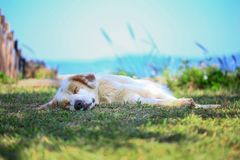 Hunde schlafen gut in der Natur stockfotografie
