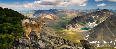Hunde sehen auch Schönheit. Lizenzfreies Stockbild