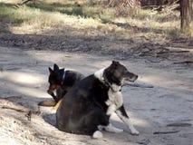 Hunde sind beste Freunde Lizenzfreies Stockfoto