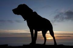 Hunde am Sonnenuntergang lizenzfreie stockbilder