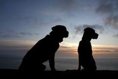 Hunde am Sonnenuntergang lizenzfreies stockfoto