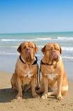 Hunde am Strand stockfoto