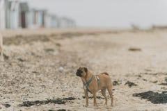 Hunde am Strand Stockfotografie