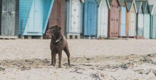 Hunde am Strand Stockbilder