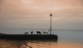 Hunde am Strand Stockbild