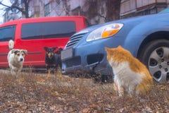 Hunde suchen sitzende Katze im Yard und dann jagen Stockbild