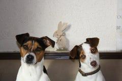 Hunde u. Ostern Lizenzfreie Stockfotos