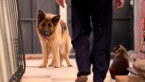 Hunde-und Cat In The Yard In-Dorf stock video