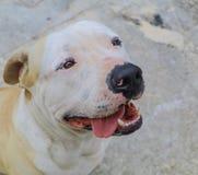 Hunde- und der Schüsselhungriges und glückliches Schauen oben lokalisiert lizenzfreie stockfotos