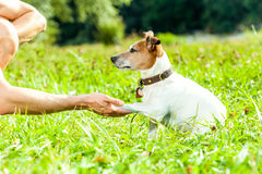Hunde- und Eigentümertraining stockfotos