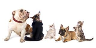 Hunde und Katze Lizenzfreies Stockfoto
