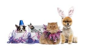 Hunde und Katze partying Lizenzfreie Stockfotos