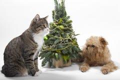 Hunde- und Katzelügen nähern sich dem Weihnachtsbaum Stockfotografie