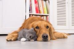 Hunde und Katzen Stockfotos