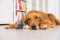 Hunde und Katzen Lizenzfreies Stockfoto