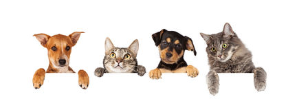 Hunde und Katzen, die über weißer Fahne hängen Stockfotografie
