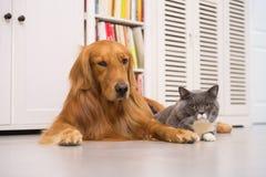 Hunde und Katzen, zuhause genommen stockbilder