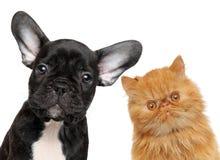 Hunde- und Katzenkopf lokalisiert Lizenzfreies Stockfoto