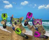 Hunde- und Katzentaucher auf dem Strand stockfoto