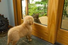Hunde- und Katzesitzung Stockfoto
