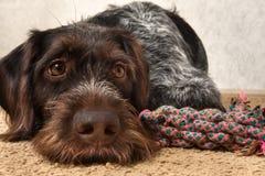 Hunde- und Knotenspielwaren liegen auf der Matte lizenzfreies stockbild