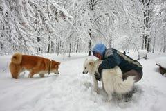 Hunde und Mann im Schnee Stockfoto