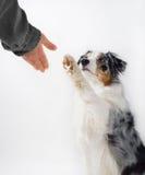 Hunde- und Menschenhändedruck. Stockbilder