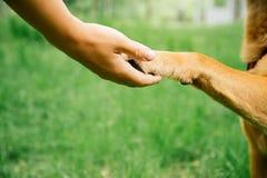 Hunde- und Menschenhändedruck Stockfotos