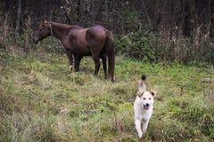 Hunde- und Pferdebetrieb stockbild