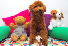Hunde und seine Freunde lizenzfreie stockfotografie