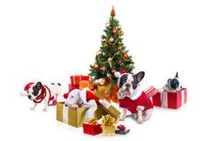 Hunde unter Weihnachtsbaum Stockfotografie
