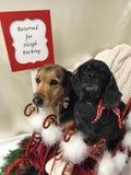 Hunde am Weihnachten stockbilder