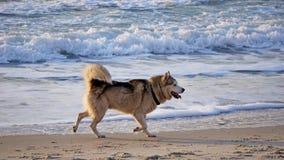 Hunde werden auf dem Strand gespielt stockfotos