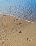 Hundeabdrücke auf dem Strandsand Lizenzfreie Stockfotos