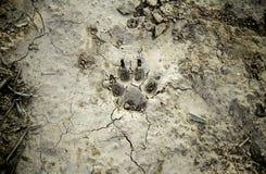 Hundeabdrücke markiert im trockenen Schlamm stockbild